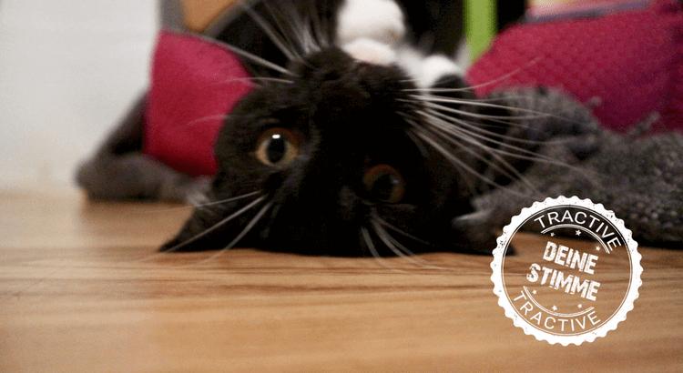 Katzenrettung in letzter Sekunde