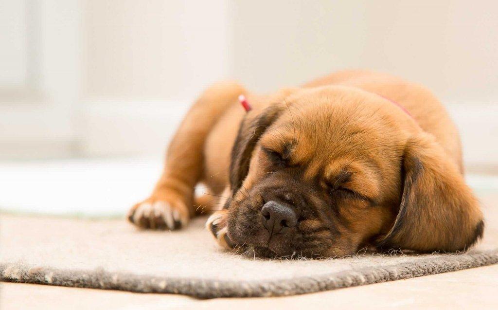Fehler bei der Hundeerziehung - beachte folgende Dinge
