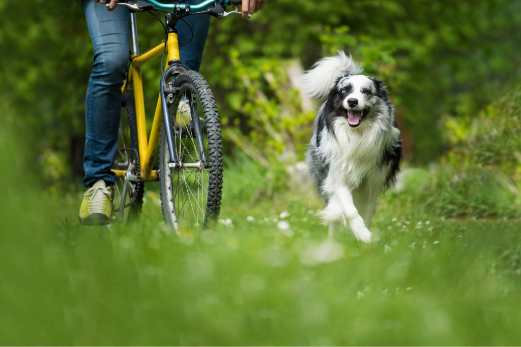 4 tips for biking with your dog