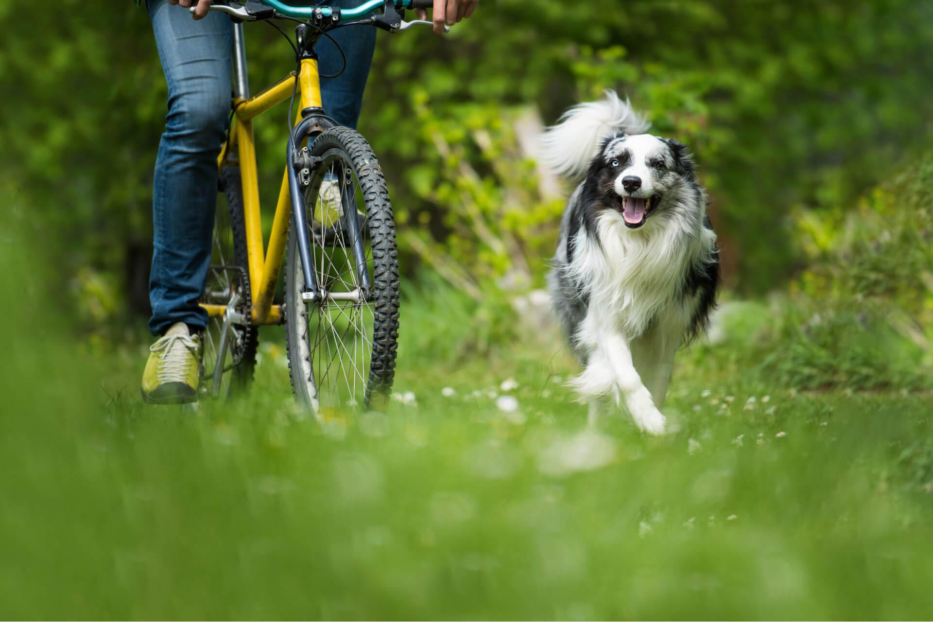 I 4 pericoli in bicicletta col cane