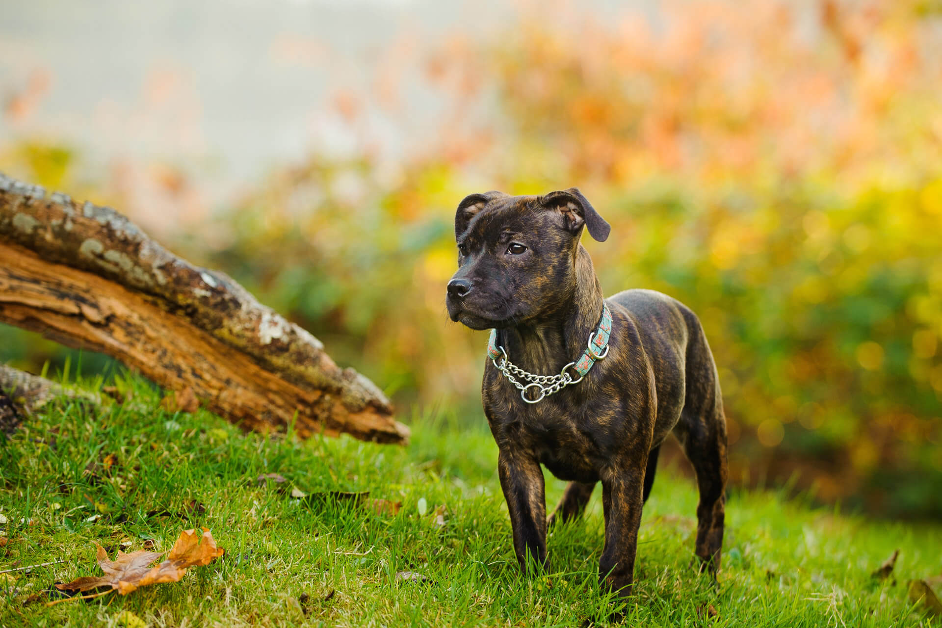 Dog-Friendly Backyard: Ideas, Tips And Tricks To Keep Your Dog Safe In Your Backyard