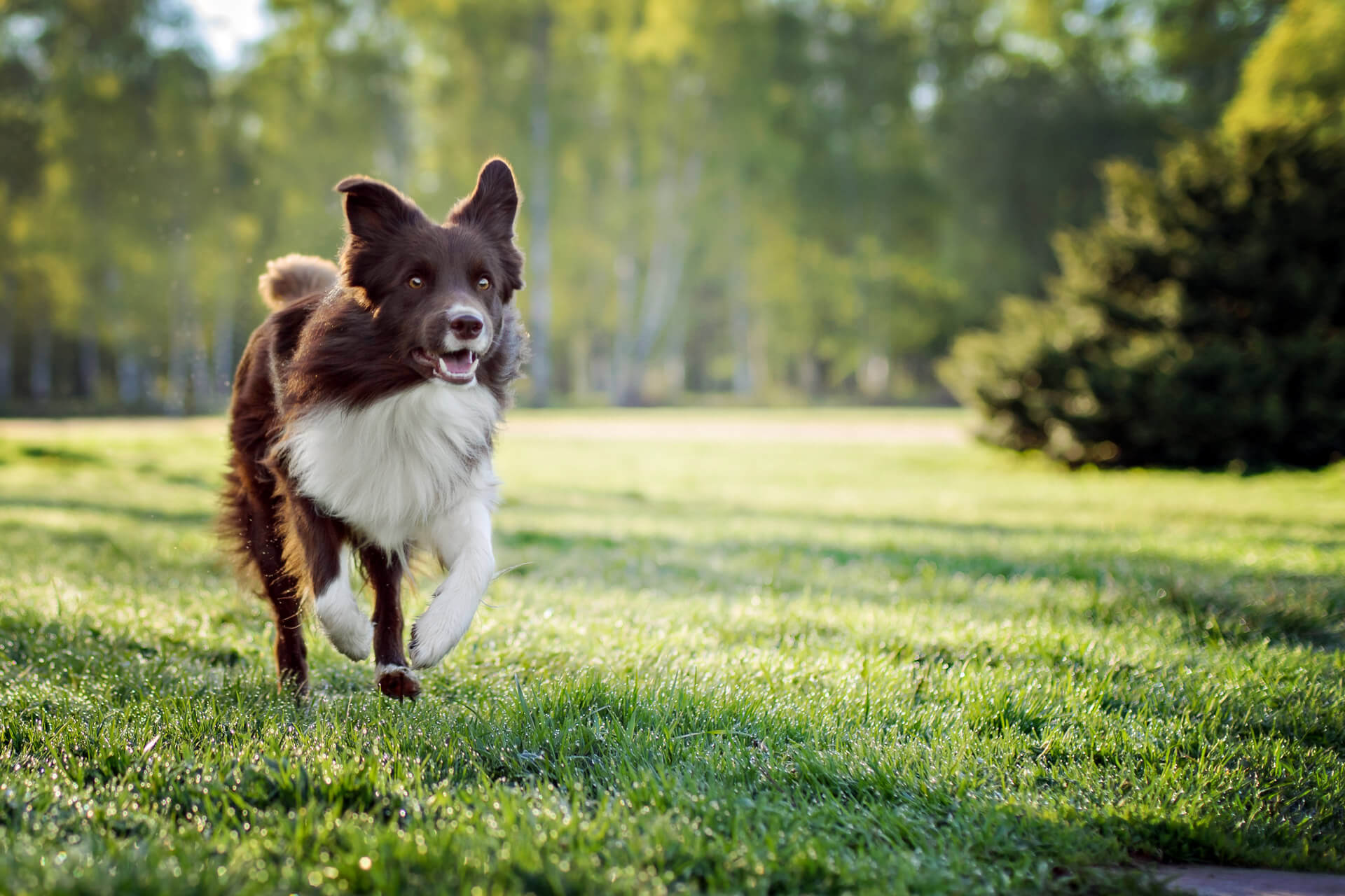 Best running dogs: Which breeds are the best dogs to run with?