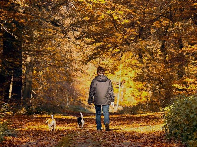 portare il cane a fare una passeggiata fuori