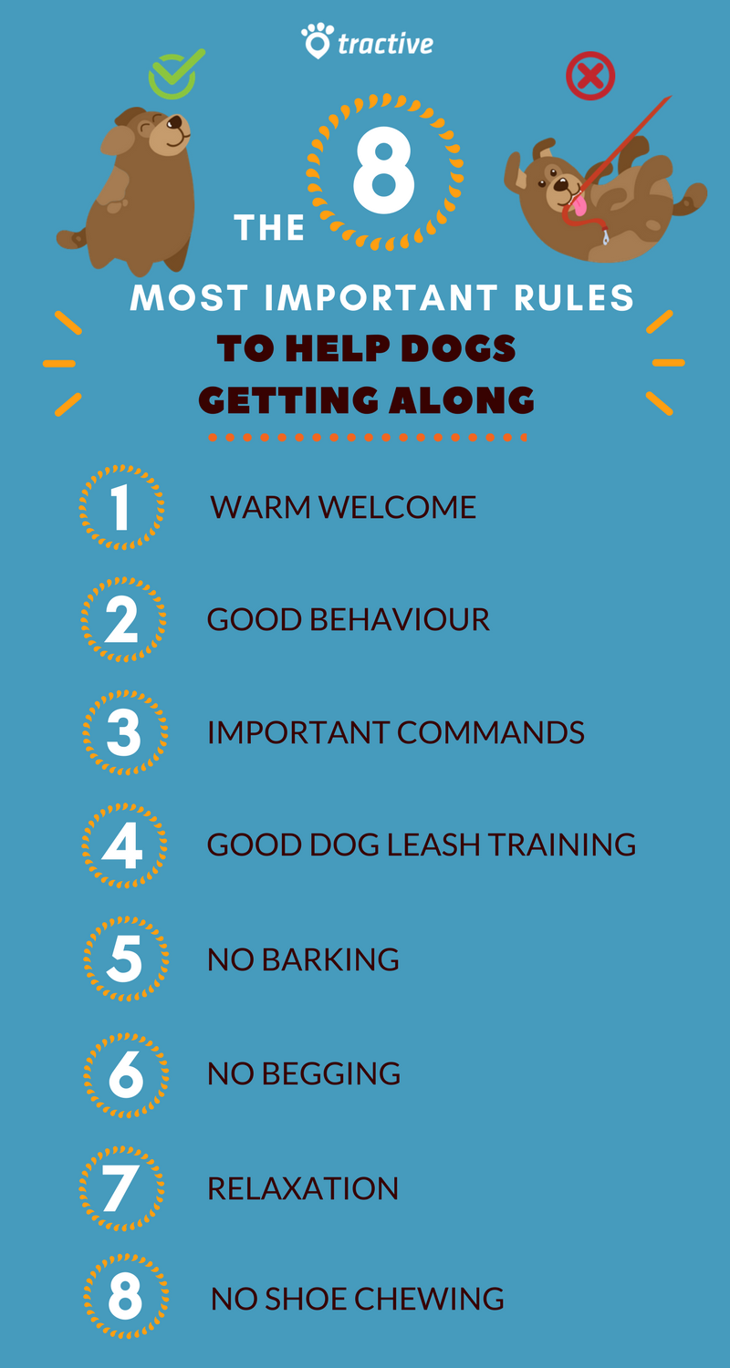 8 Rules how the dog should behave