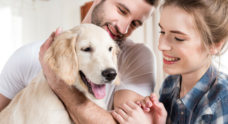 5 steps to make your dog happy