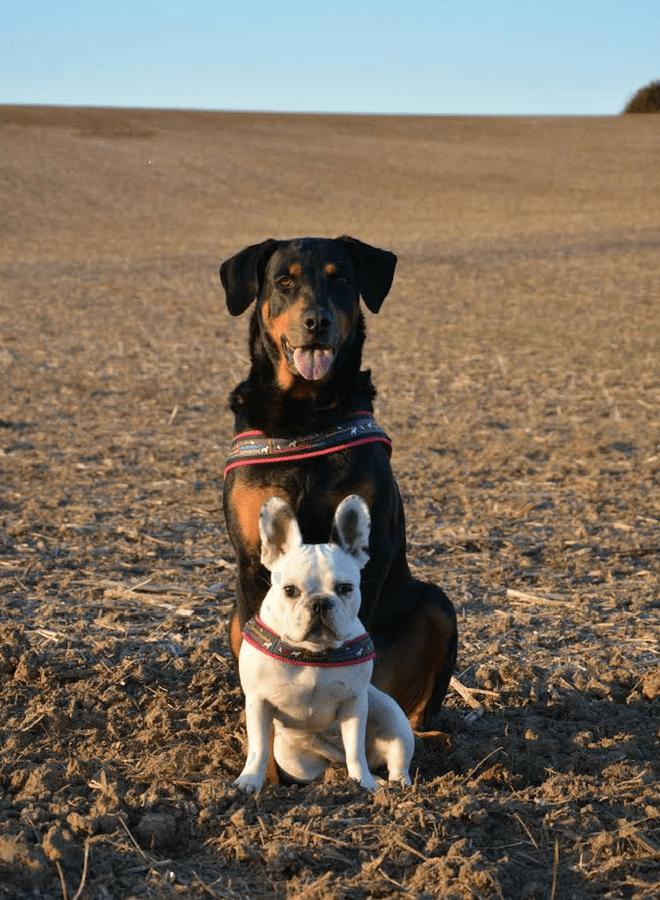 Tauber Hund