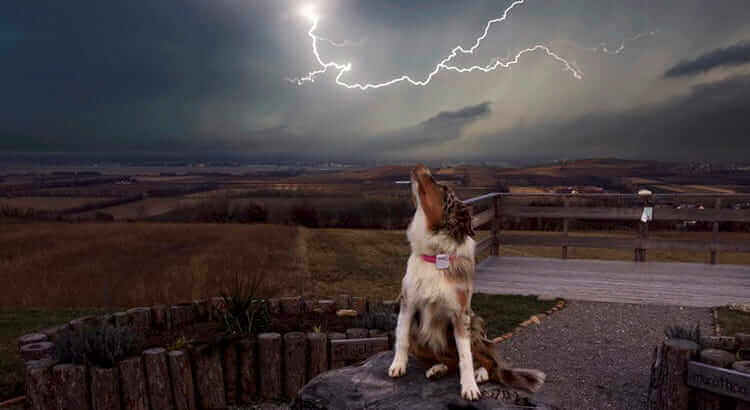 5 Ways to Stop Your Dog from Being Frightened during a Storm