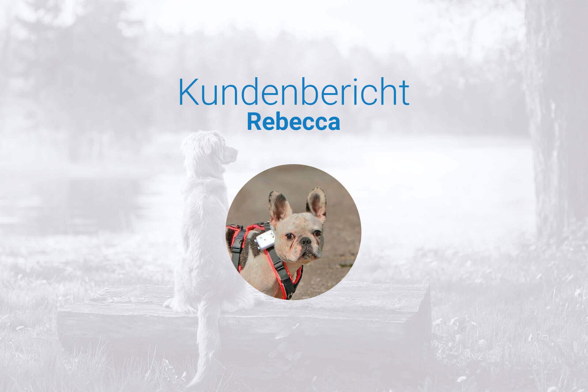 Tauber Hund was tun - Kunden berichten über ihre Erfahrungen mit dem Tractive GPS Ortungsgerät