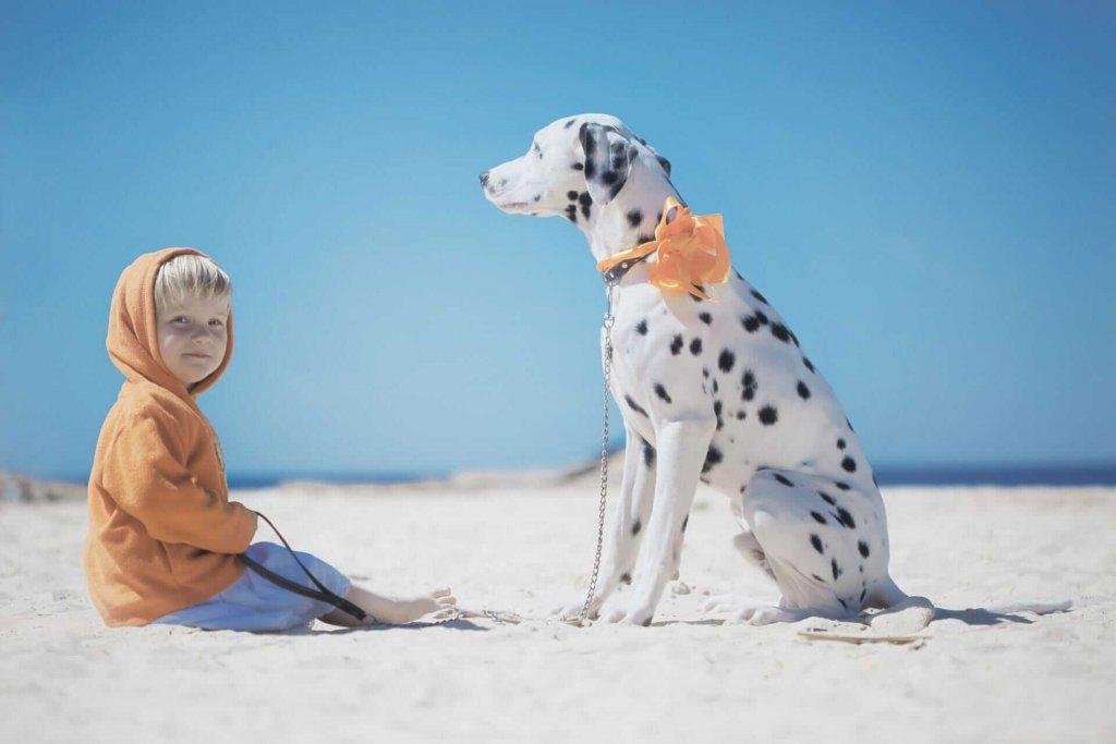 Bedeutung gelbe Schleife auf Hund