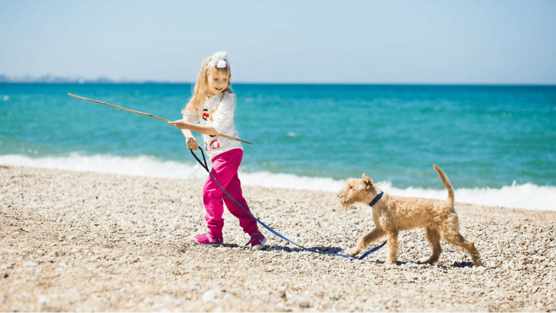 4 Tipps damit dein Hund Wasser liebt