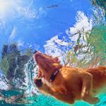 7 razze di cani che amano l'acqua
