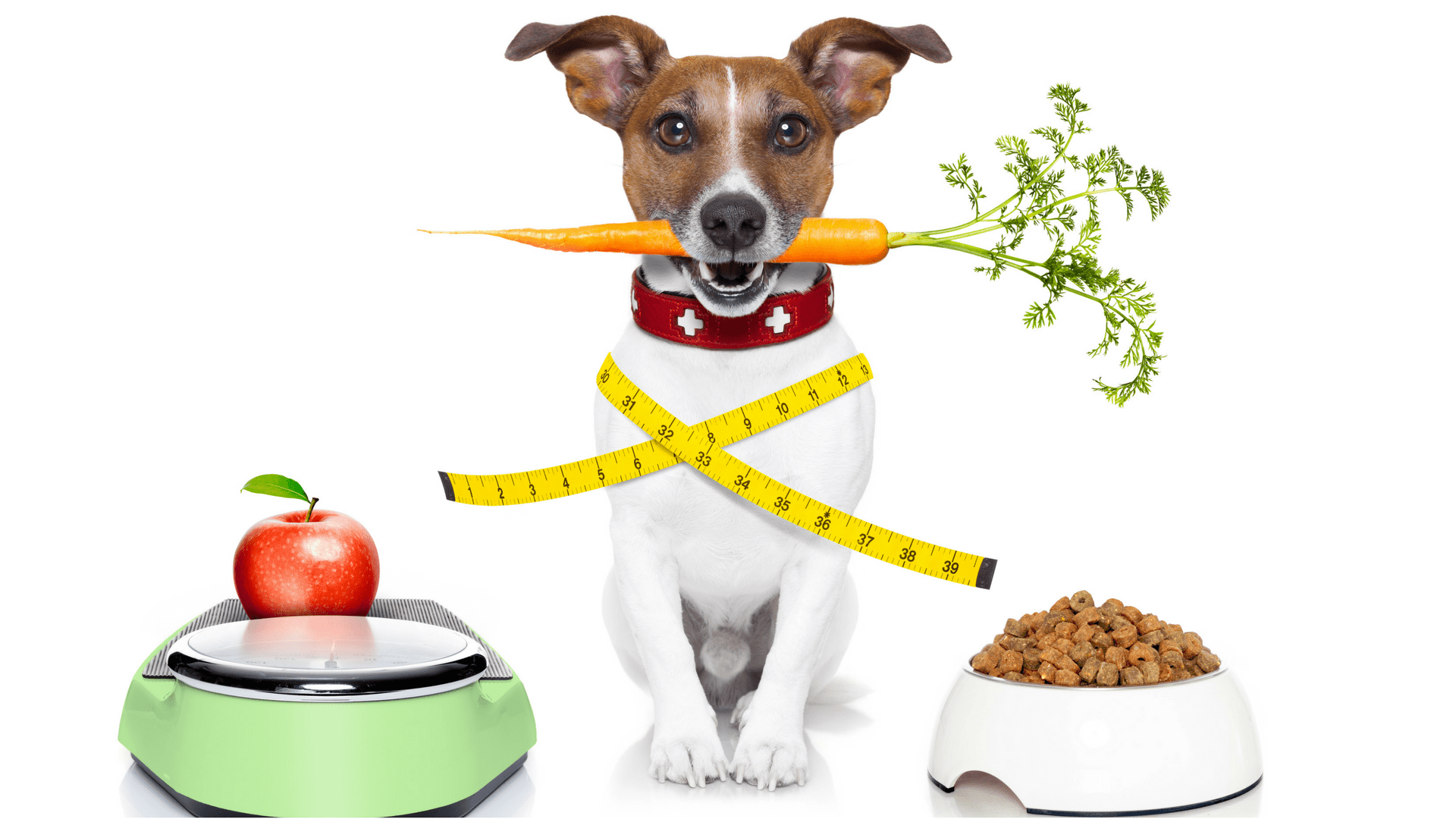 Come faccio a capire se il mio cane è in sovrappeso?