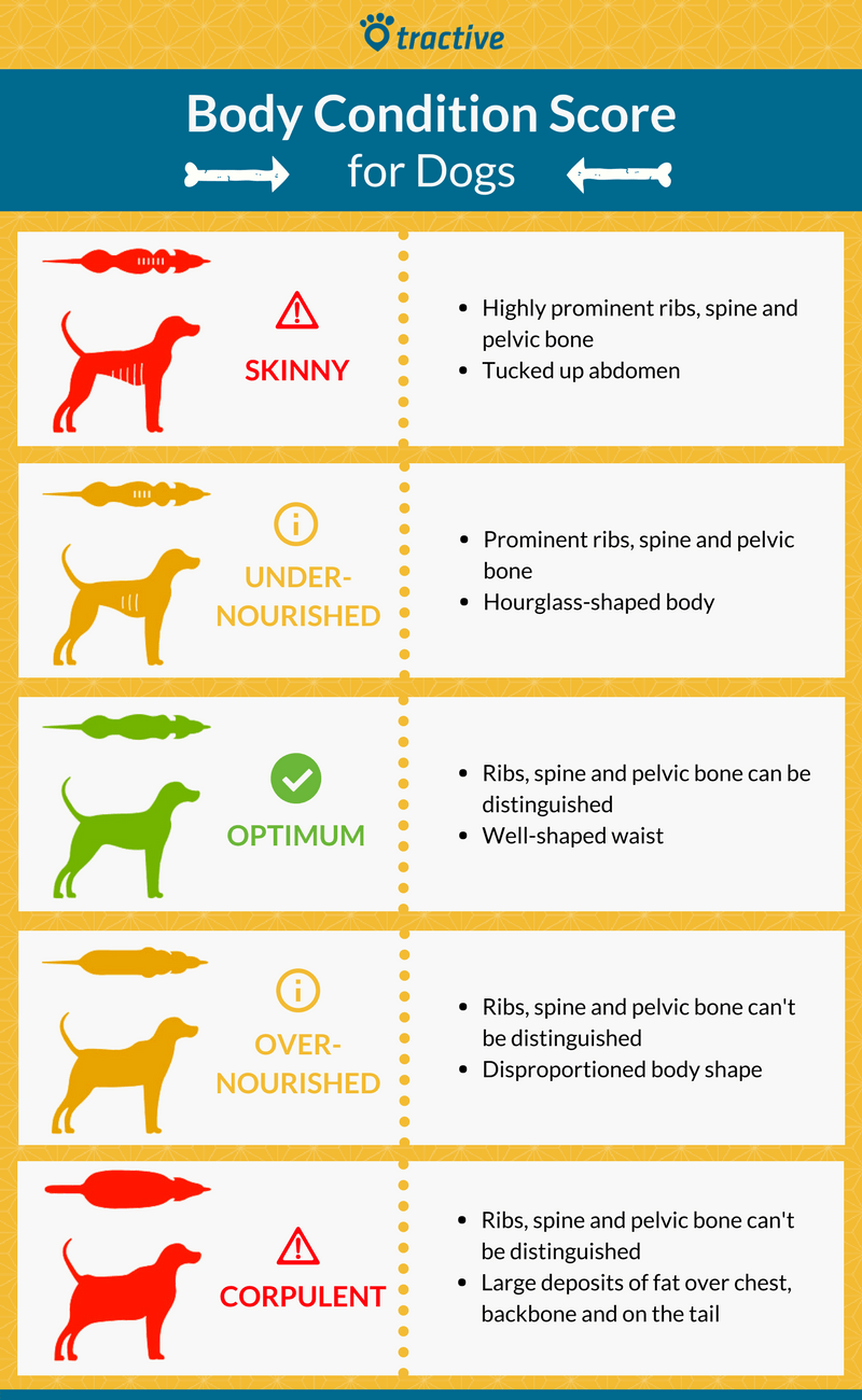Body Condition Score for Dogs-2