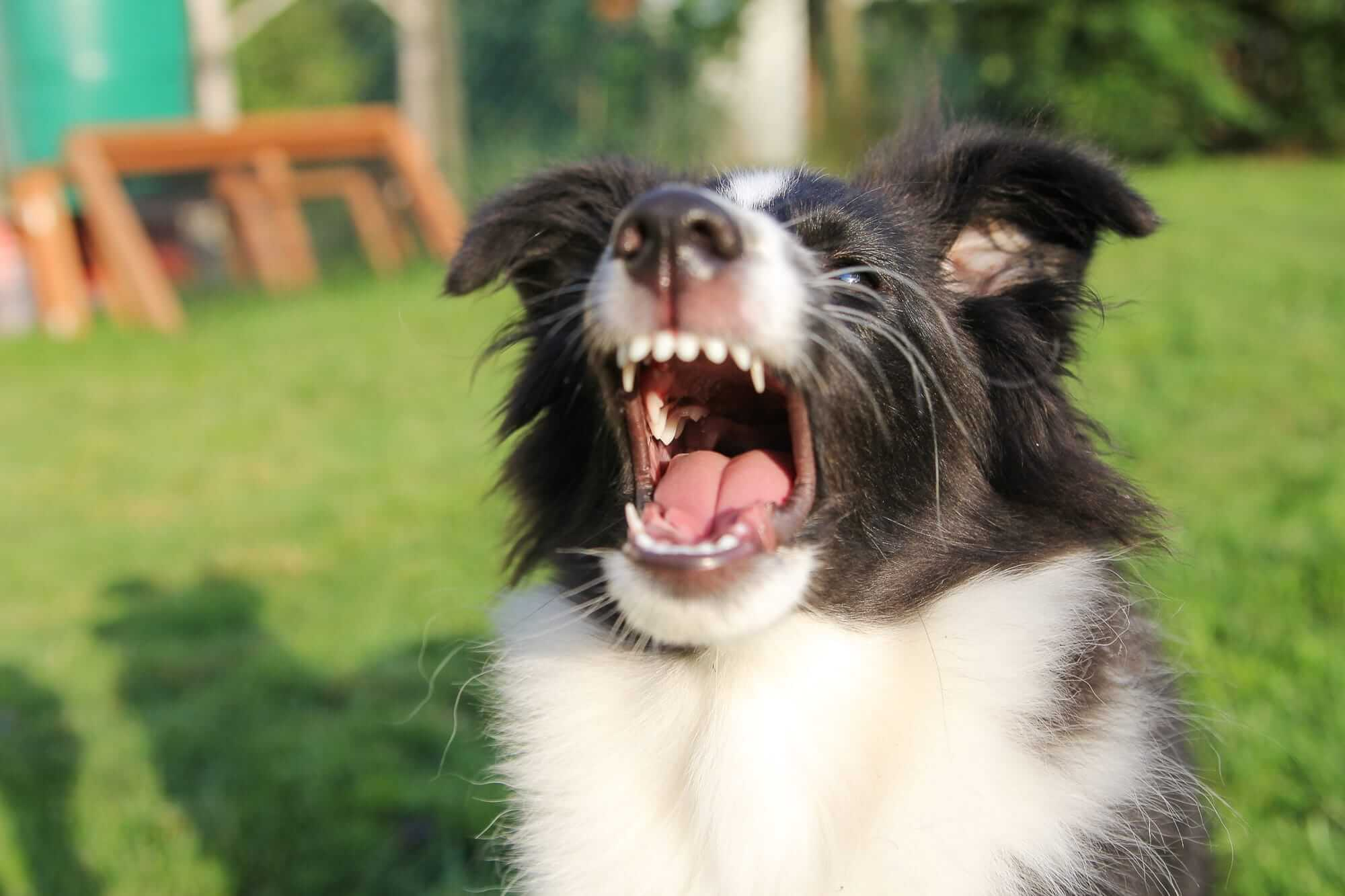 How Can I Prevent My Dog From Barking All The Time