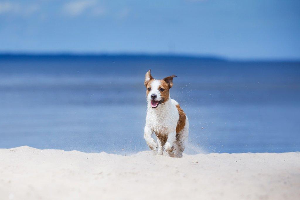4 Tipps für einen tierischen Urlaub mit Hund und GPS Gerät
