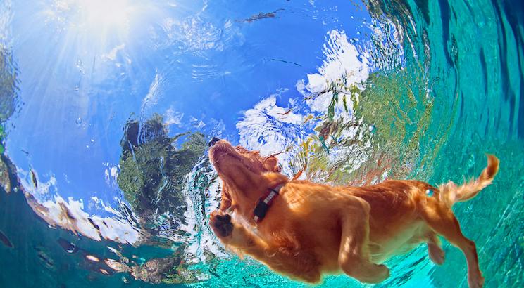 7 Hunderassen die Wasser mehr als lieben