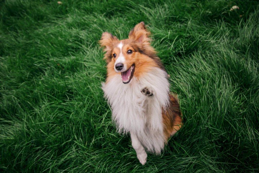 Hundeparcour Rally Obedience: Die neue Trendsportart?