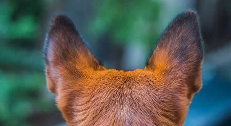 Dog from the back
