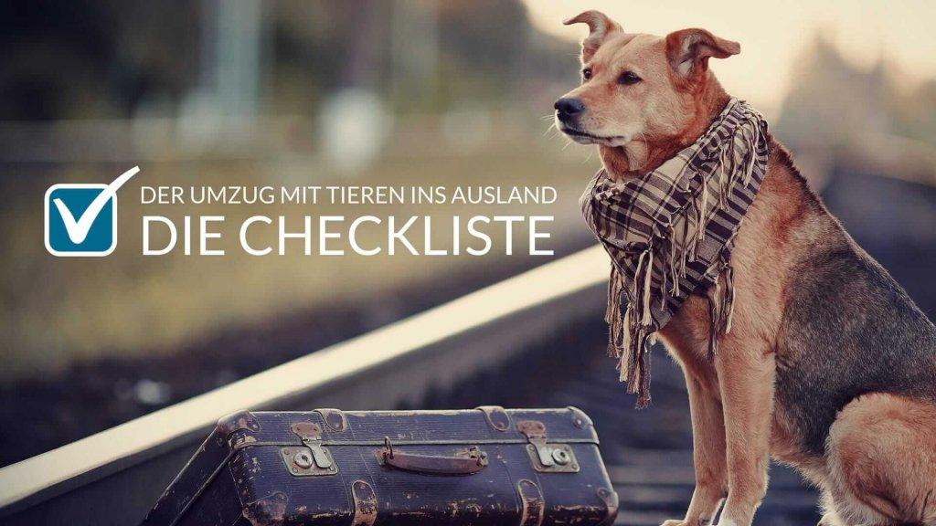 Umzug mit Tieren ins Ausland: Checkliste