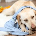 I cani rubano i calzini: il perché in 5 ragioni