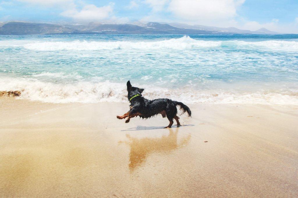 5 Tipps für den perfekten Badeurlaub mit Hund am Meer