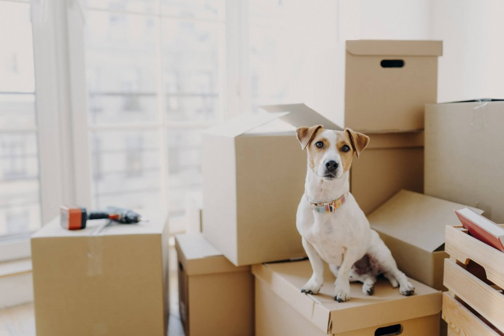 Moving abroad with a pet: a checklist against all the odds