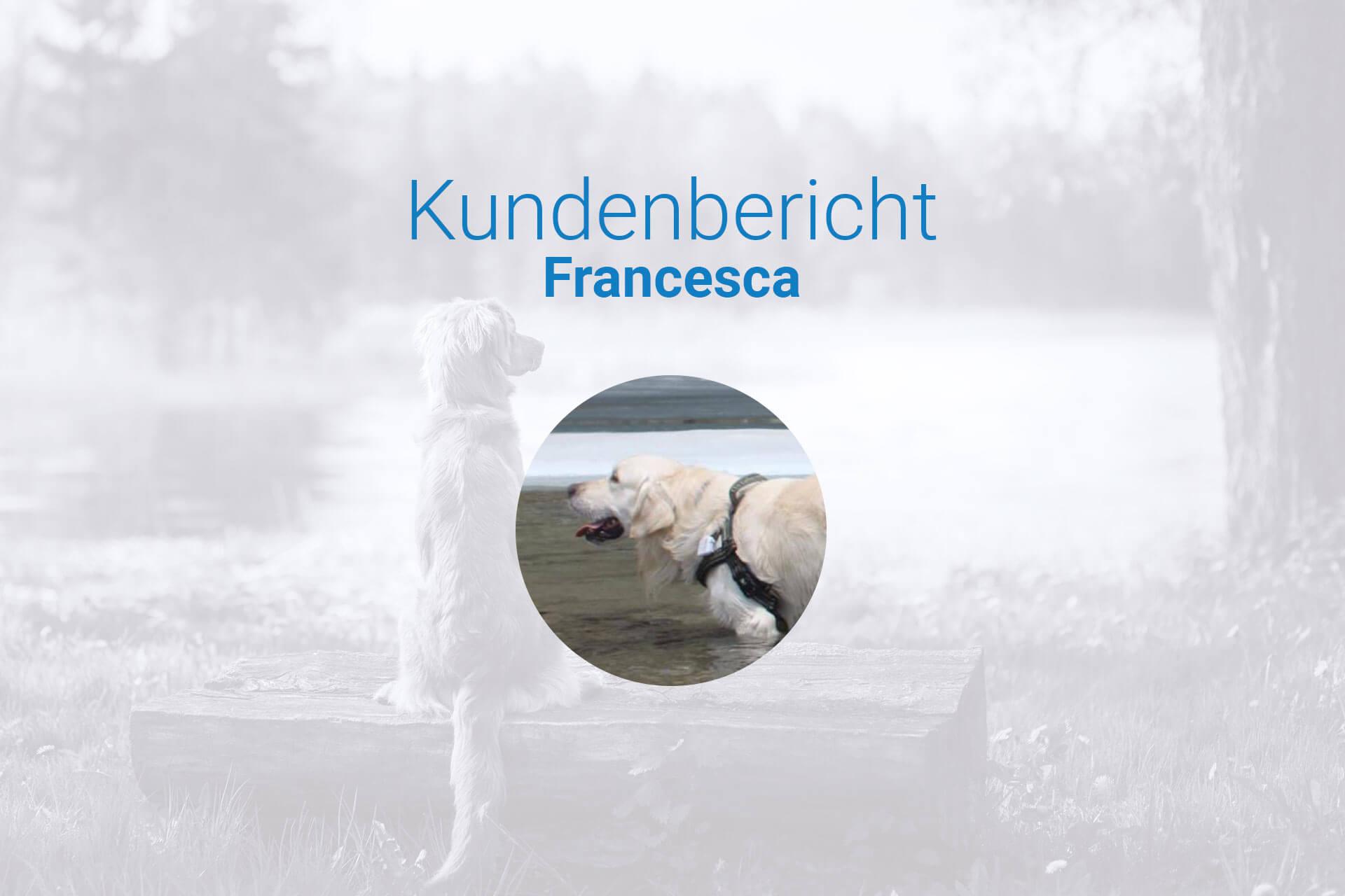 Hund büxt aus - Erfahrungsaustausch über den Tractive GPS Tracker