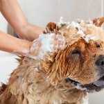 make dog smell better tips