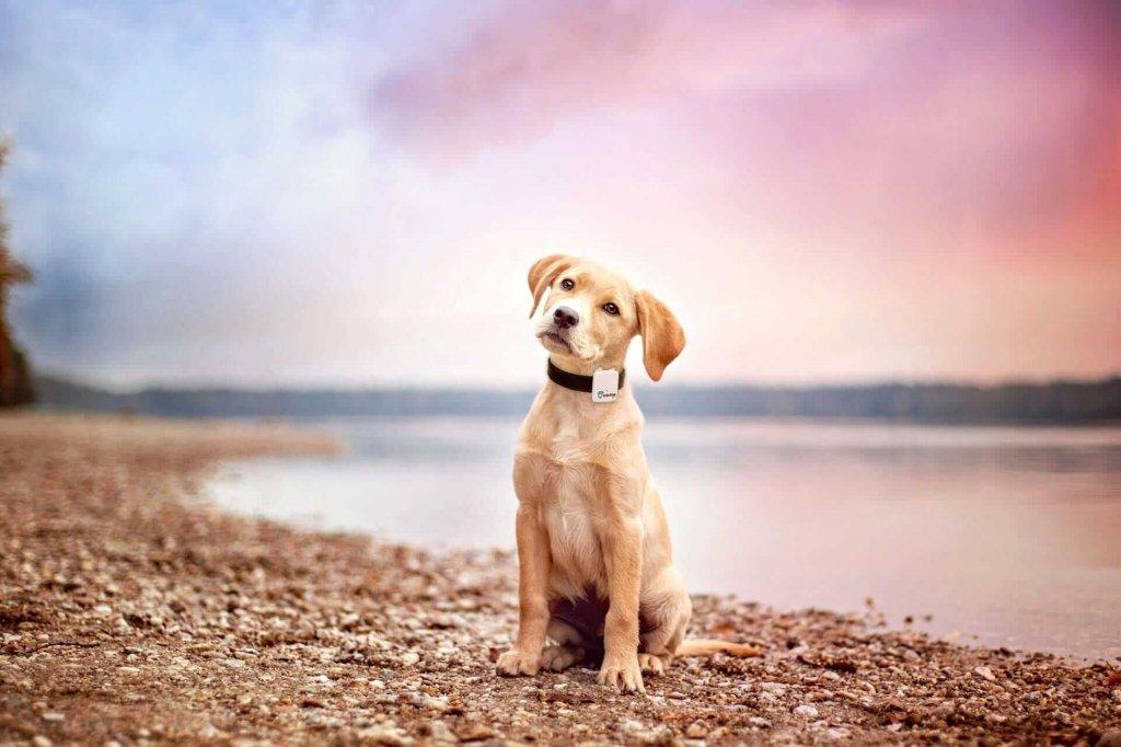 5 Tips perfekter Urlaub am Meer oder See mit Hund