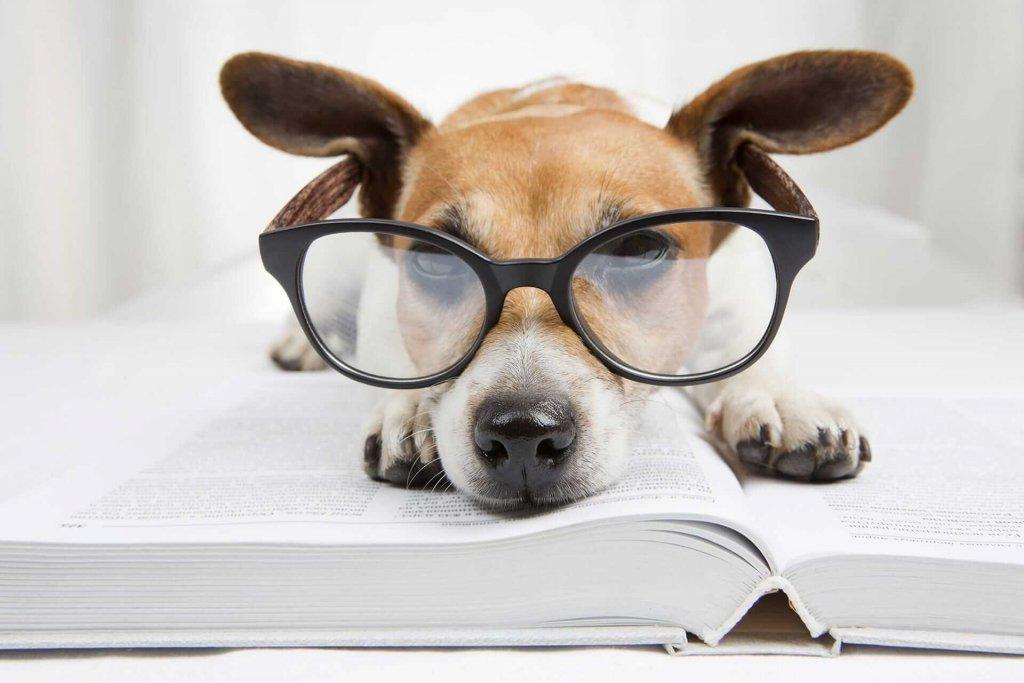 Intelligente Hunde: Wie intelligent ist dein Hund?