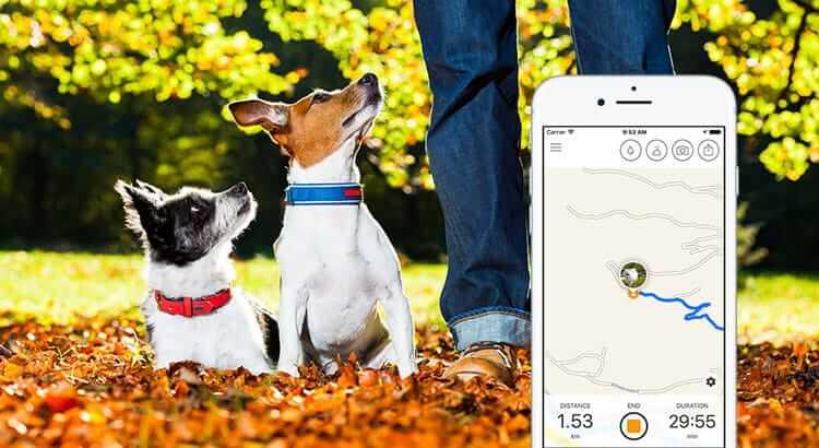 Mit Hunden Gassi gehen: 5 Geheimnisse für mehr Spaß