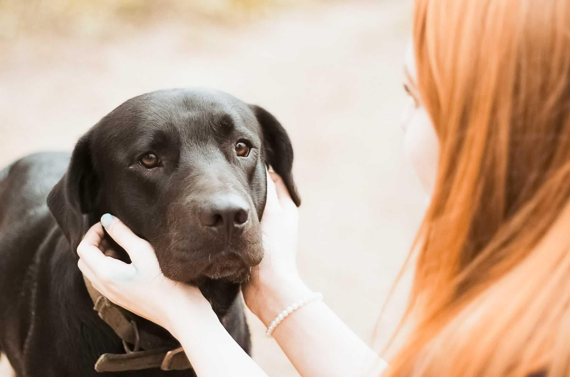 Vermeide eine Depression bei Hunden zum Schulstart mit diesen Tipps