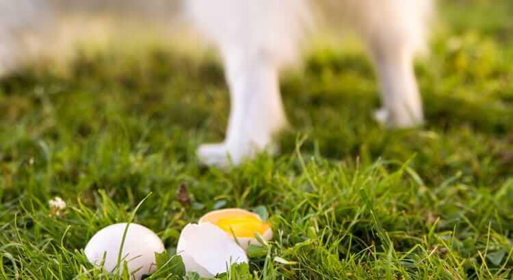 Neutered dog behavior: 5 false statements