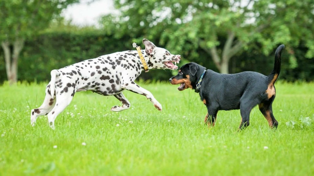 How to make an aggressive dog be more sociable