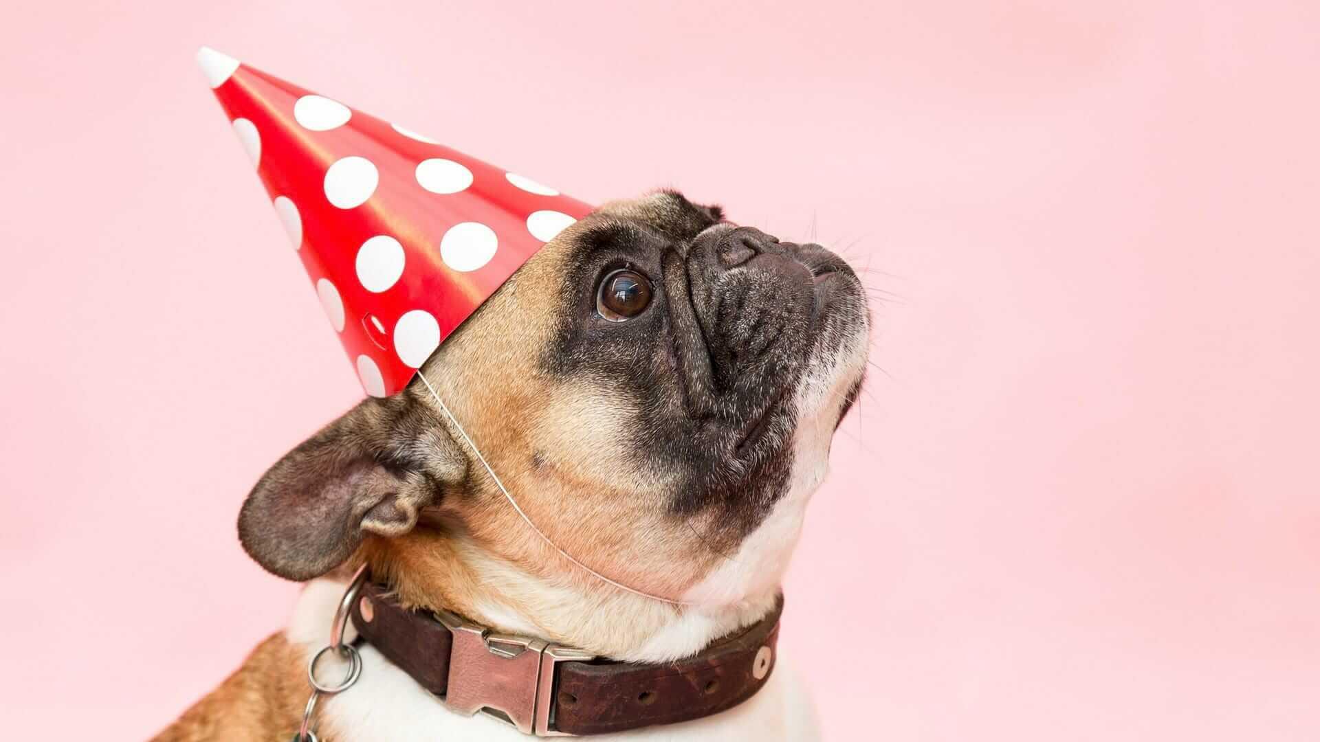 Il miglior modo per celebrare Fido: 6 regali per cani