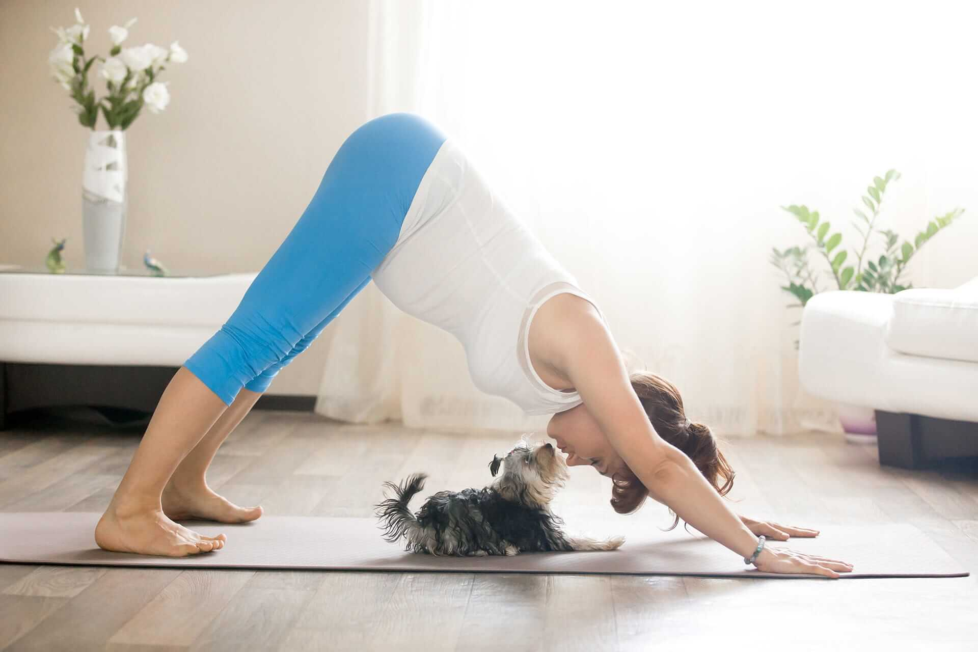 Dog Yoga aka Doga: why you should do yoga with your dog