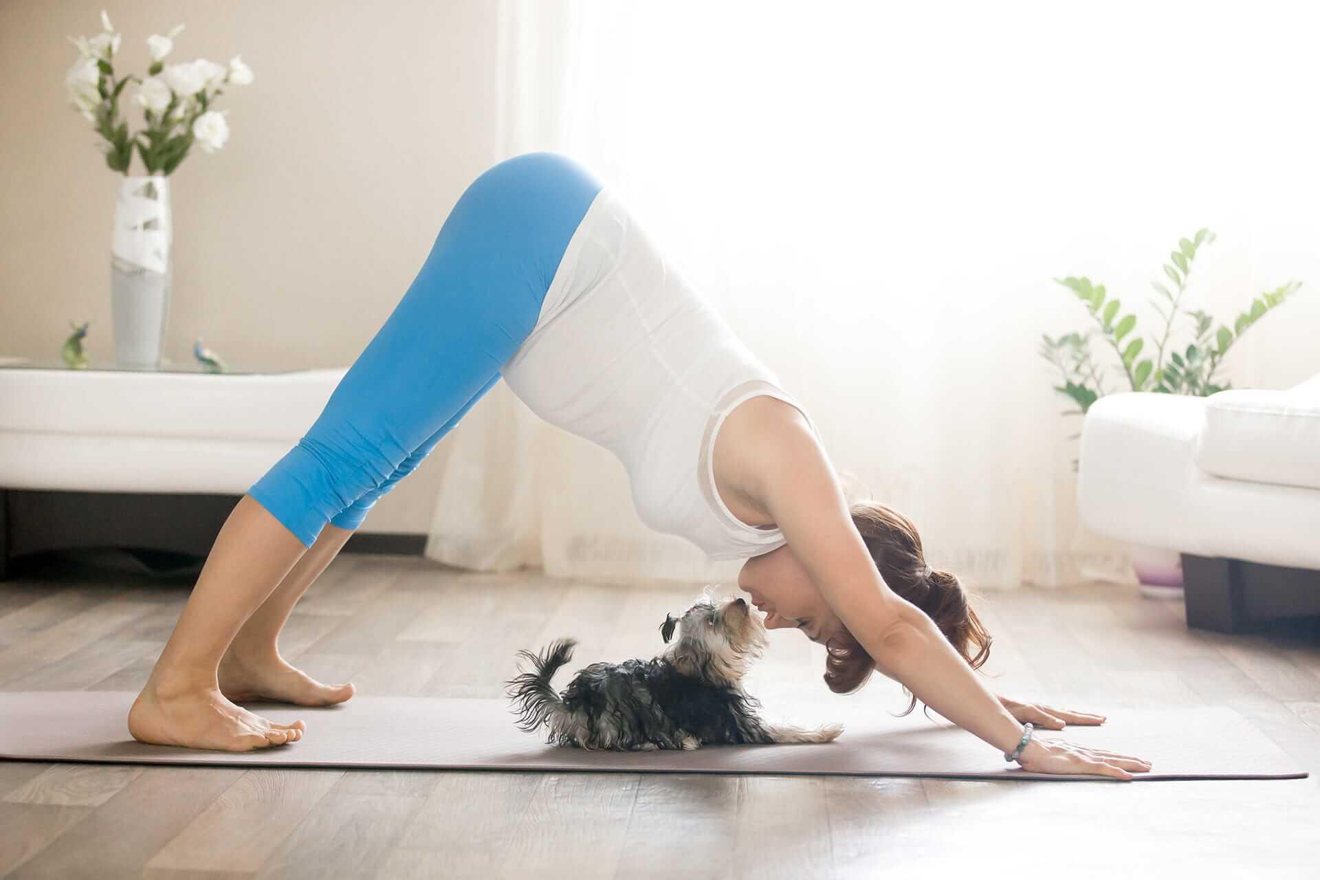doga yoga mit hund