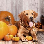 best tips to prepare your pet for halloween