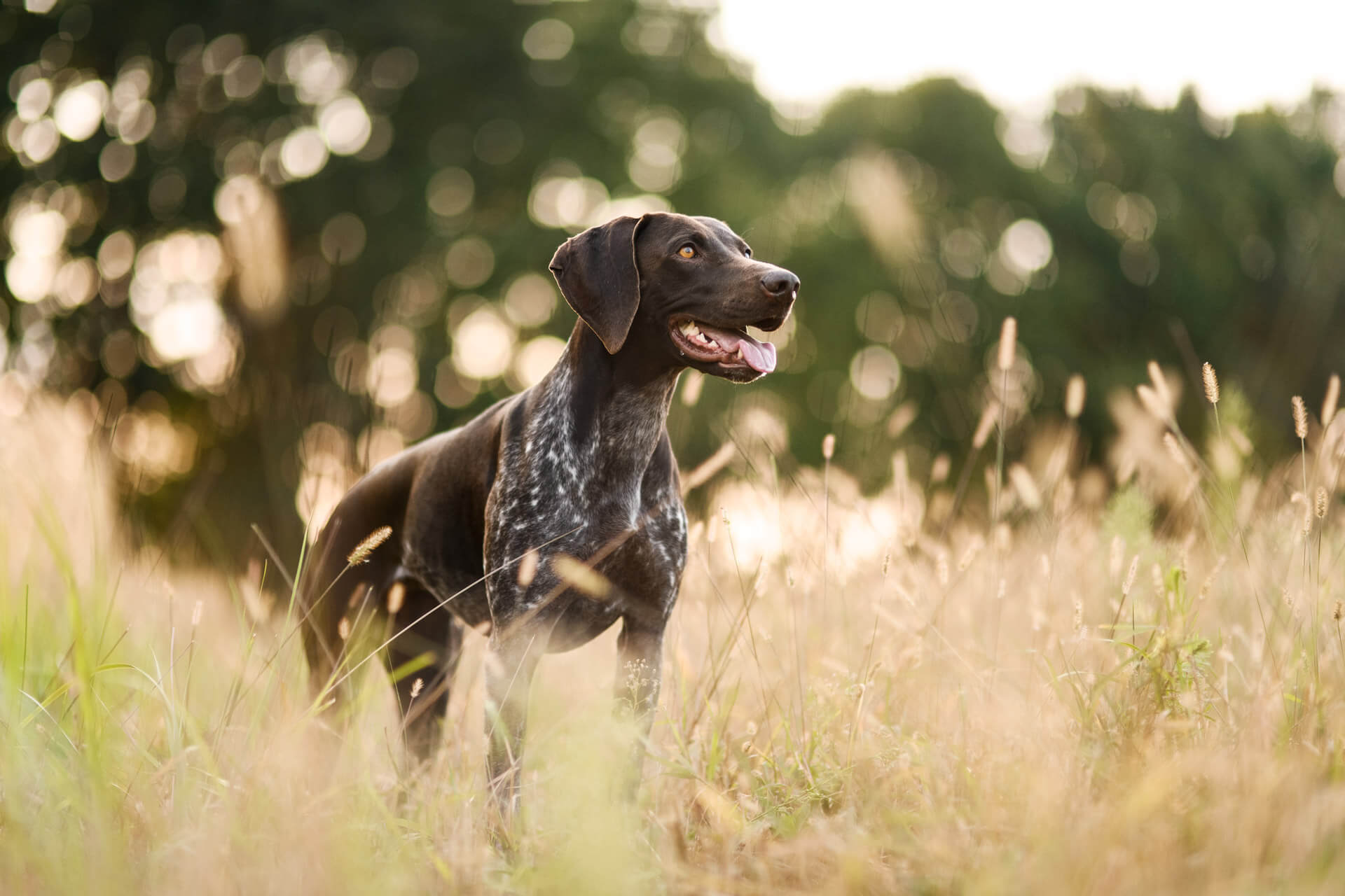 brown dog standing in field
