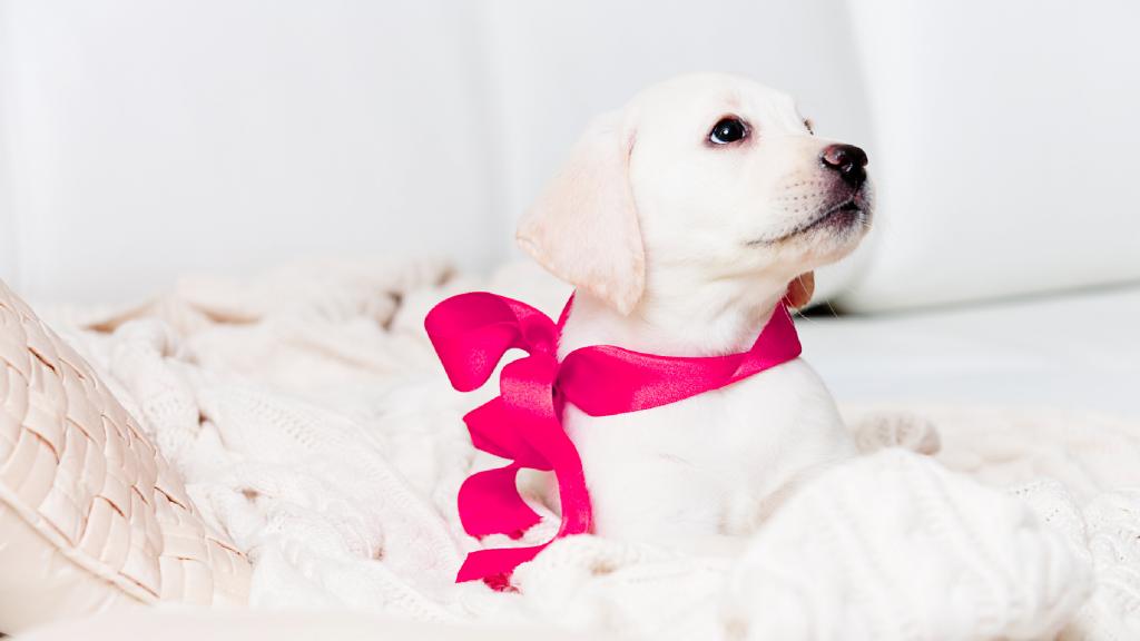 Zu Weihnachten einen Hund anschaffen? Beantworte vorher diese 8 Fragen