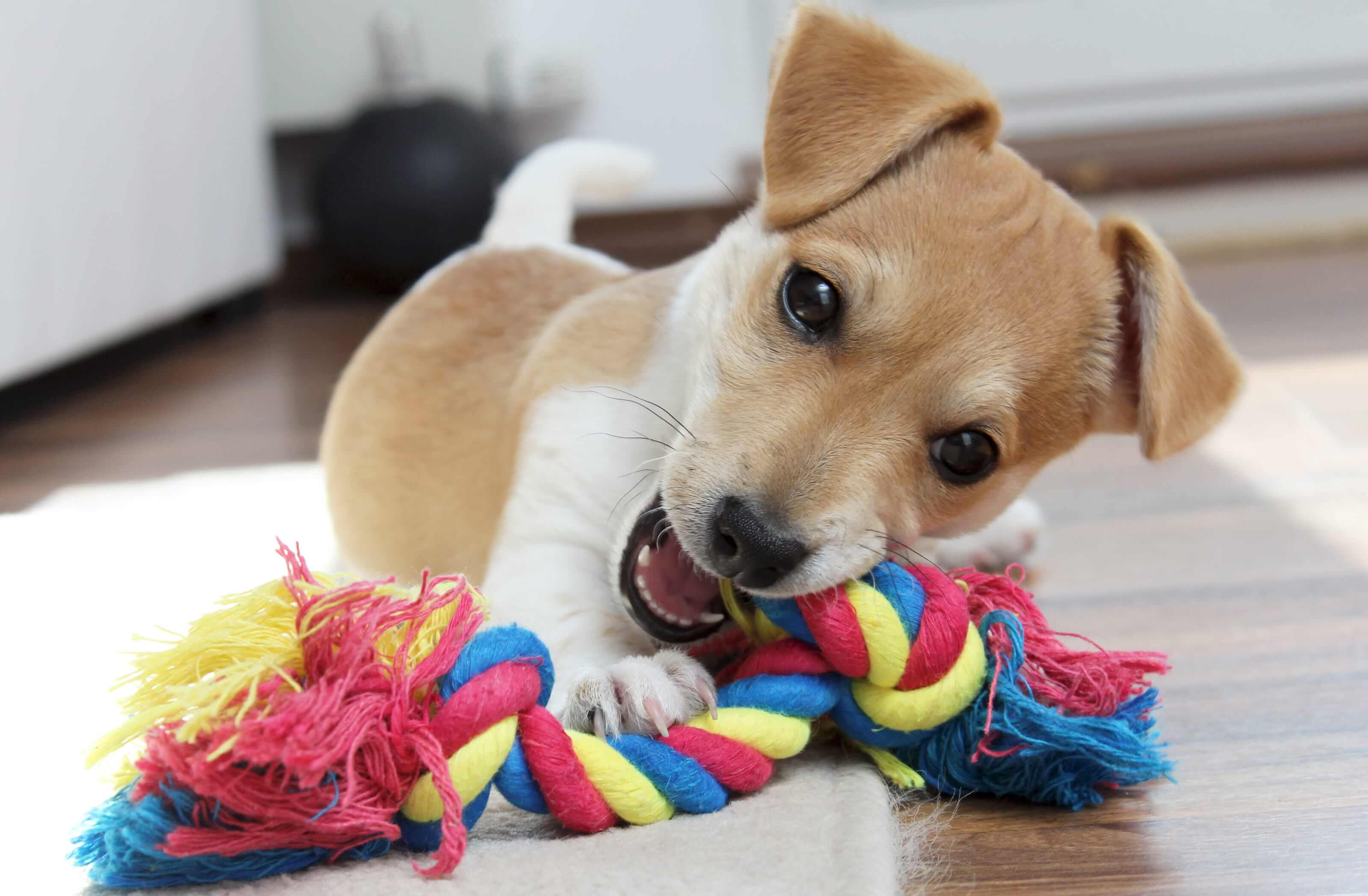 Best Dog Toys For Teething Puppies