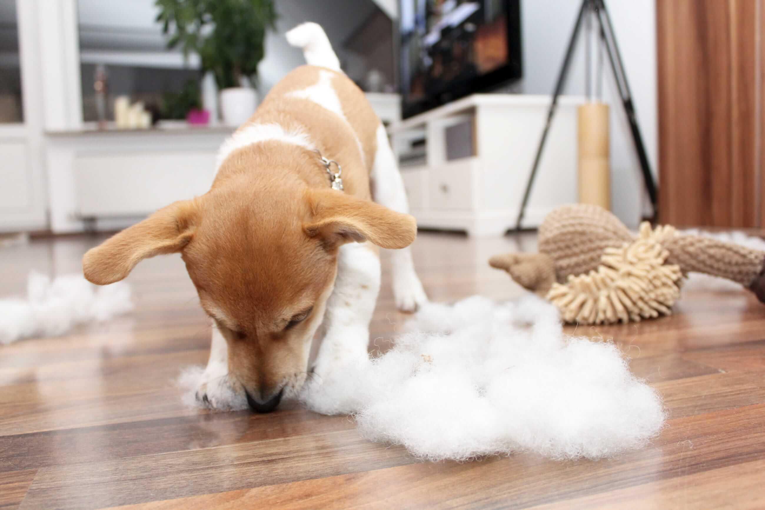 Hundesprache deuten Herumkauen auf Spielzeug Hundeverhalten deuten
