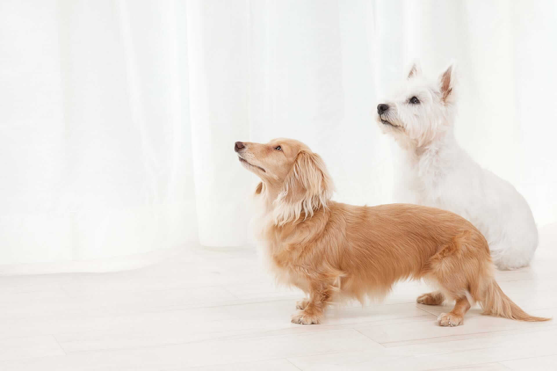 dog breed compatibility