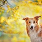 Idealgewicht für Hunde berechnen mit dem Tractive BMI Rechner