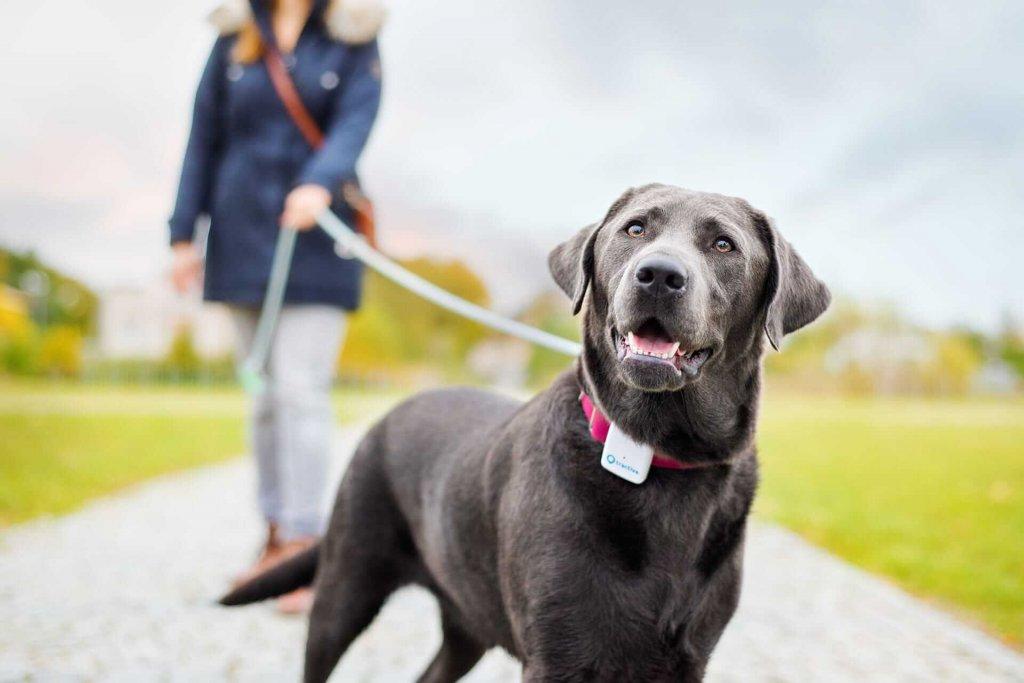 Hund-spazieren-gehen-mit-Tractive-GPS-Geräte-Was-ist-Tractive