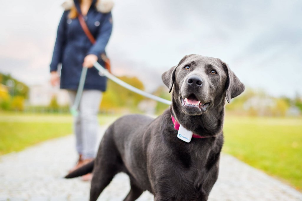 tractive-gps-dog-with-tracker