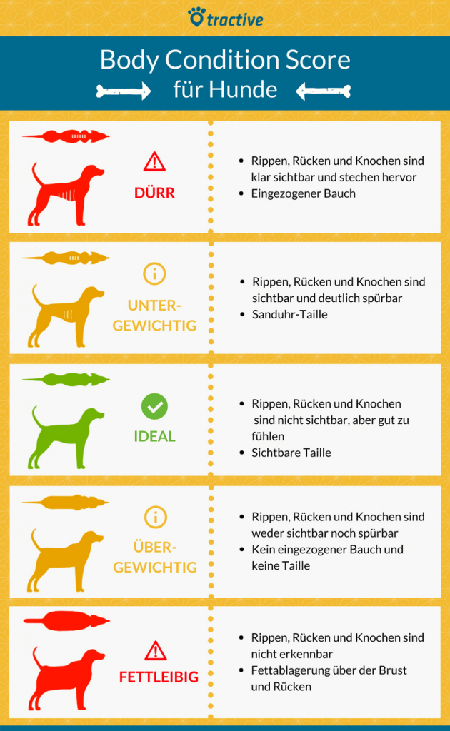 What Dogs Can T Eat Chart