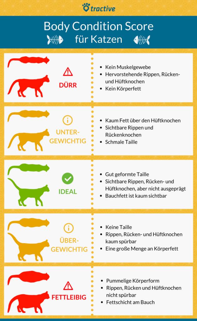 Body Condition Score für Katzen