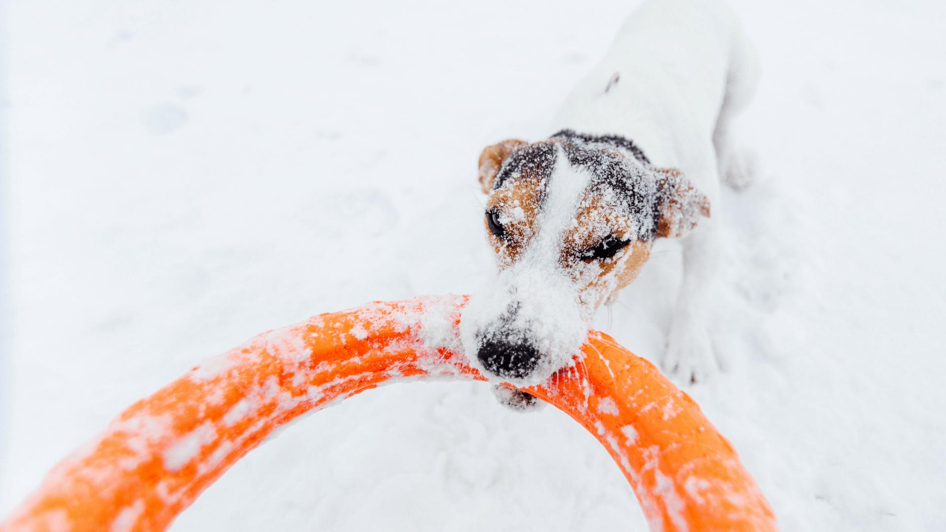Hund frisst Schnee Gegenmaßnahmen