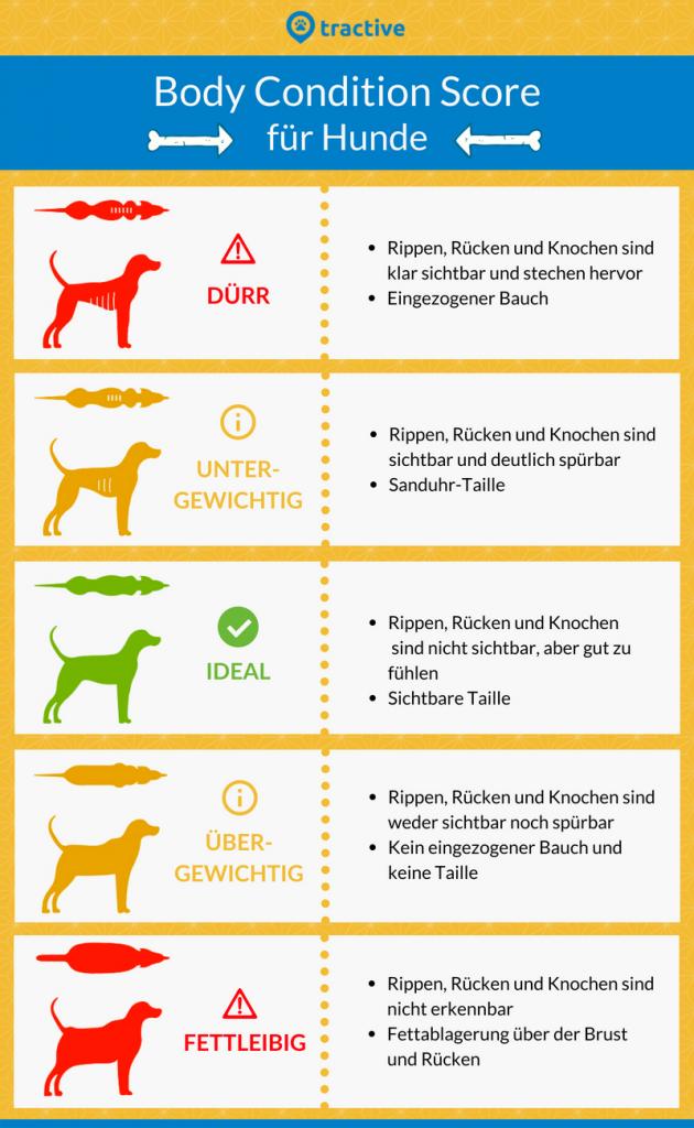 Body Condition Score - Übersicht, ob dein Hund fettleibig ist oder nicht